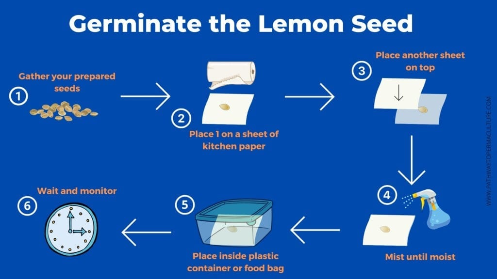 Germinate the Lemon Seed infographic