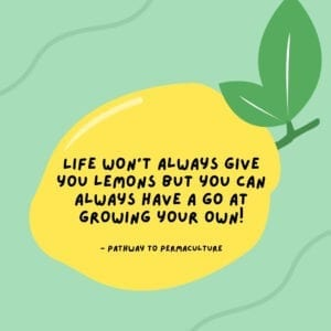 """Quote reading """"Life won't always give you lemons but you can have a go at growing your own!"""" by Pathway to Permaculture on backdrop of a lemon"""
