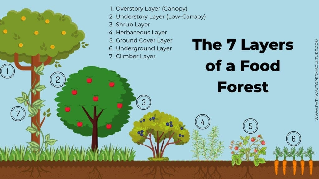 Animated image showing The 7 Layers of a Food Forest