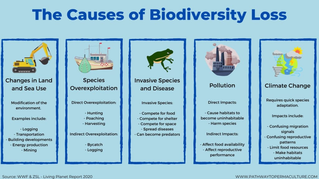 The Causes of Biodiversity Loss Infographic