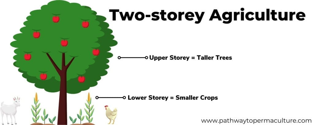 Infographic depicting Two-story Agriculture by Pathway to Permaculture