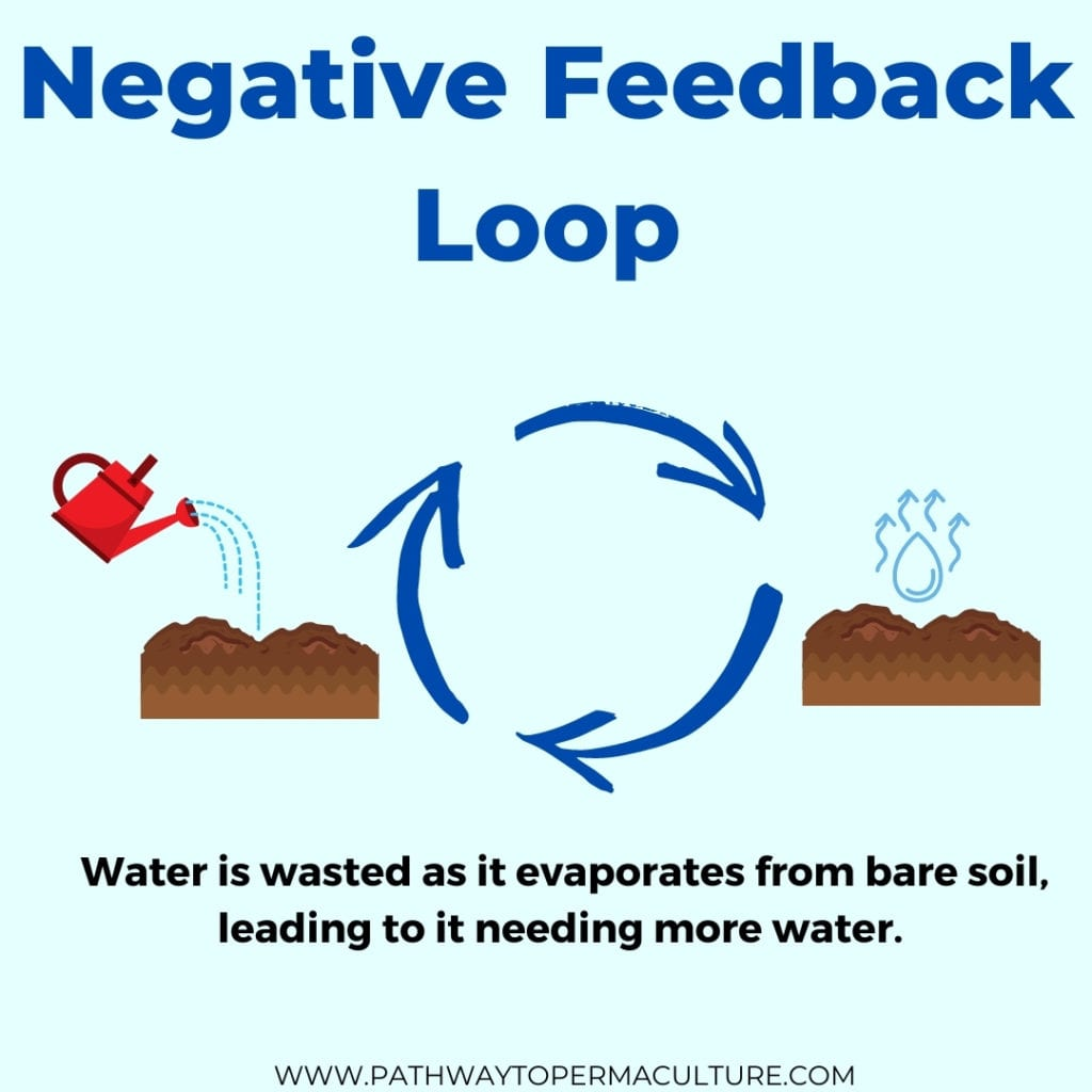 An image depicting a simple negative feedback loop found in the garden
