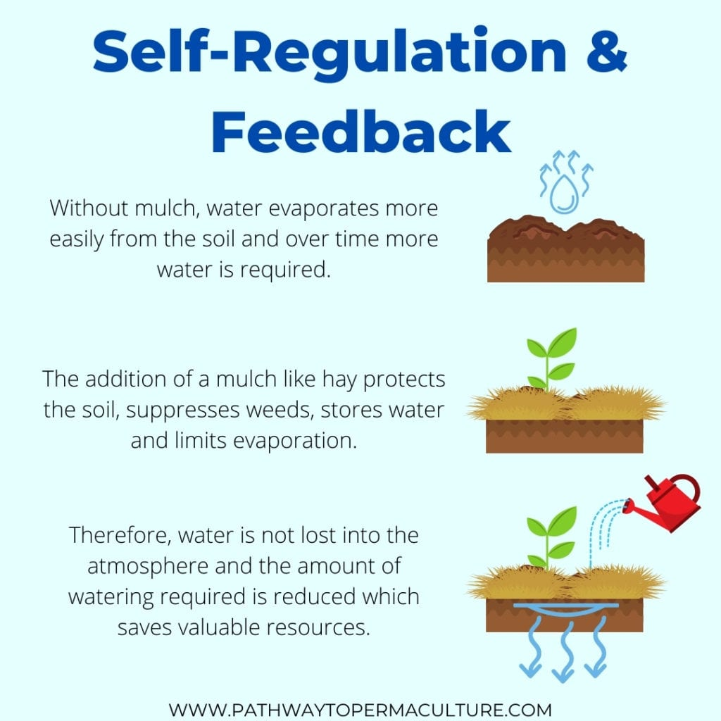 Infographic showing Self-Regulation and Feedback, one of the Principles of Permaculture